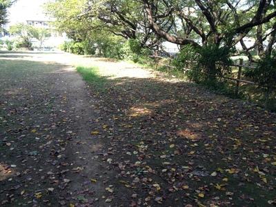 夏の終わり〜秋のコト_e0239908_1836228.jpg