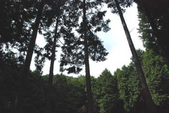 森のひととき_e0103024_11181599.jpg