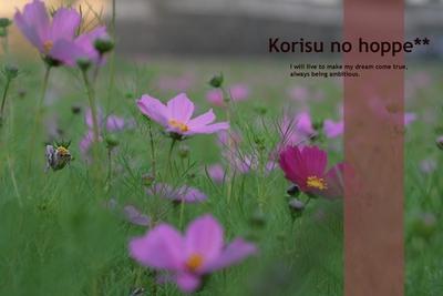 秋ですね~_f0230625_2051641.jpg