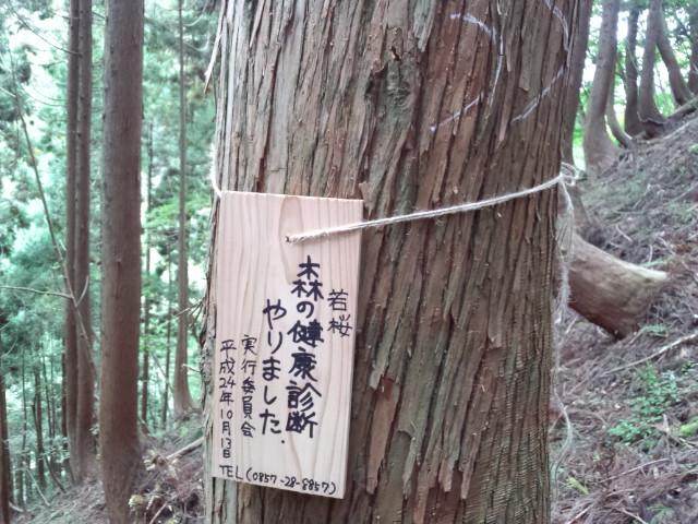 《 森の健康診断 in 若桜 》 _f0101226_040352.jpg