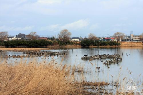 146 米子水鳥公園 ~大当たりの撮影~_c0211532_17332468.jpg
