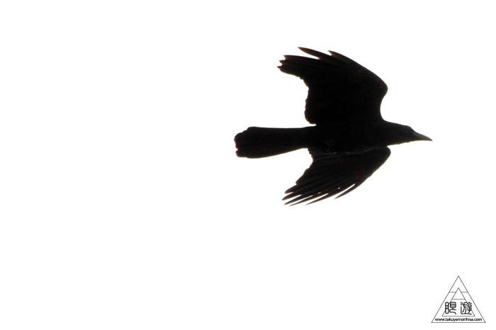 146 米子水鳥公園 ~大当たりの撮影~_c0211532_17355746.jpg
