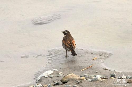 146 米子水鳥公園 ~大当たりの撮影~_c0211532_17571533.jpg