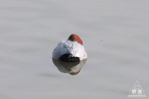 146 米子水鳥公園 ~大当たりの撮影~_c0211532_17591760.jpg