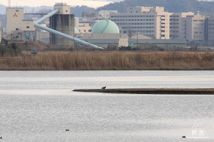146 米子水鳥公園 ~大当たりの撮影~_c0211532_18171550.jpg