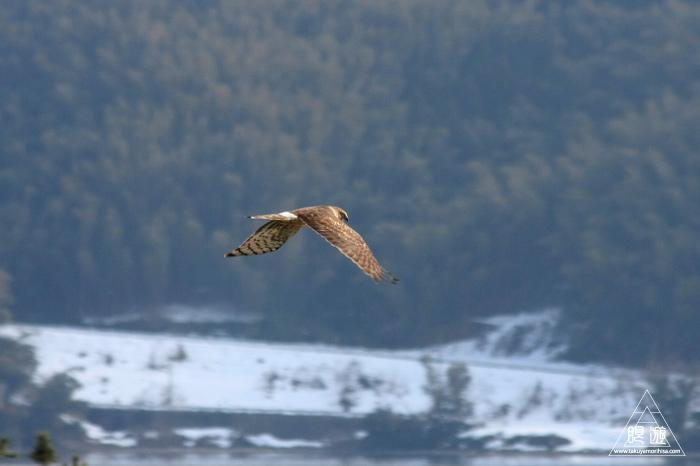 146 米子水鳥公園 ~大当たりの撮影~_c0211532_1881654.jpg