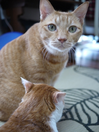 猫のお友だち ちゃーくんちょびくんペコちゃん編。_a0143140_19315117.jpg