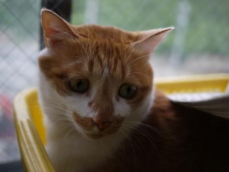 猫のお友だち ちゃーくんちょびくんペコちゃん編。_a0143140_1945122.jpg