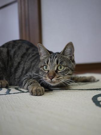 猫のお友だち ちゃーくんちょびくんペコちゃん編。_a0143140_1948783.jpg