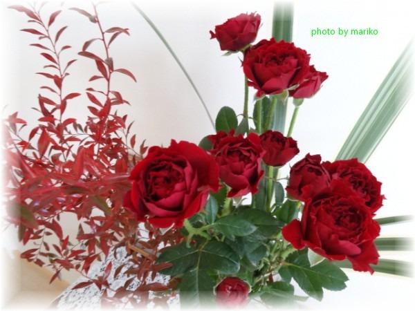 燃ゆる深紅のミニ薔薇_d0165645_9141030.jpg