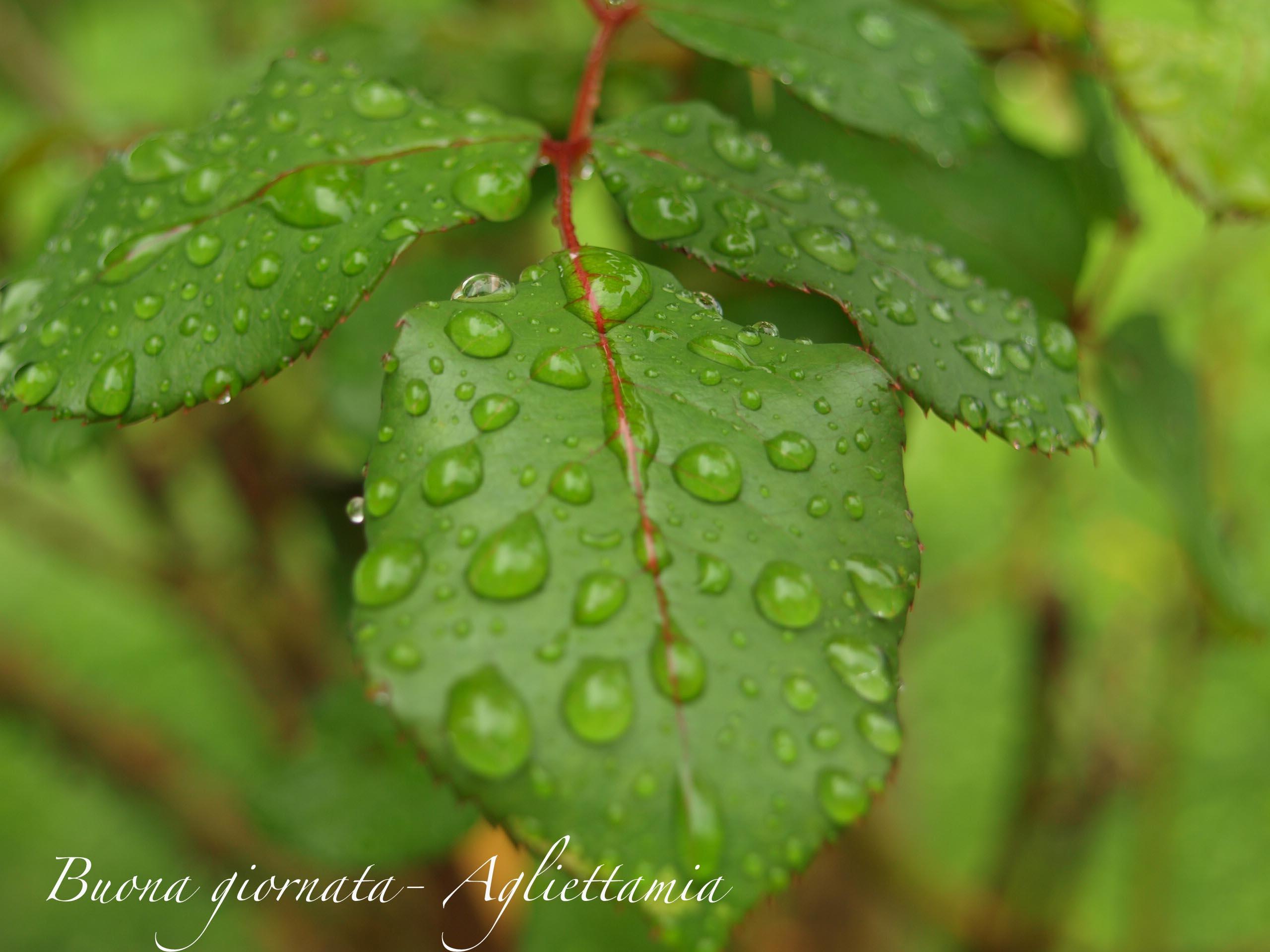雨がくれるキラキラな贈り物@山の家_c0179785_6142731.jpg