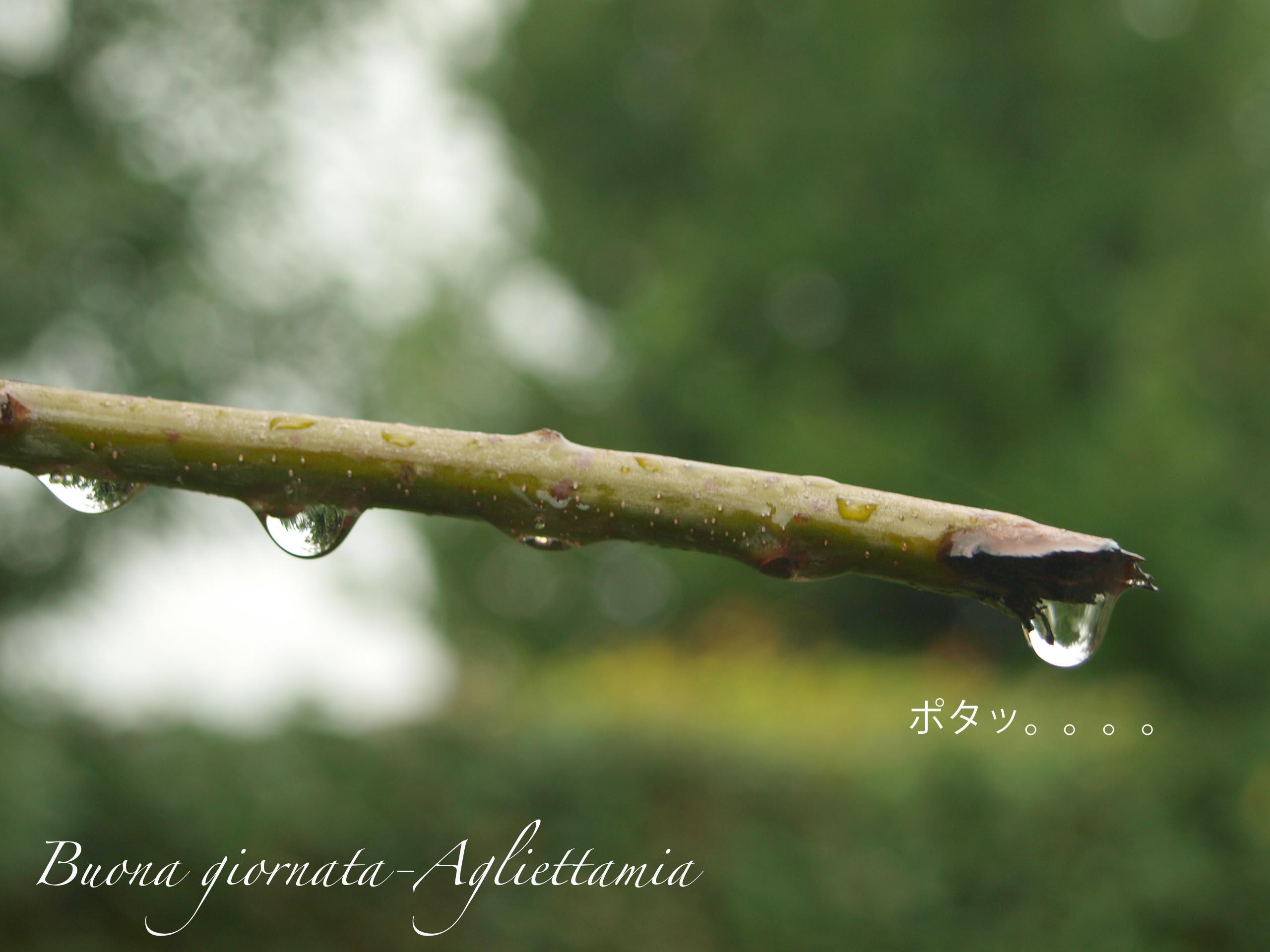 雨がくれるキラキラな贈り物@山の家_c0179785_6144747.jpg