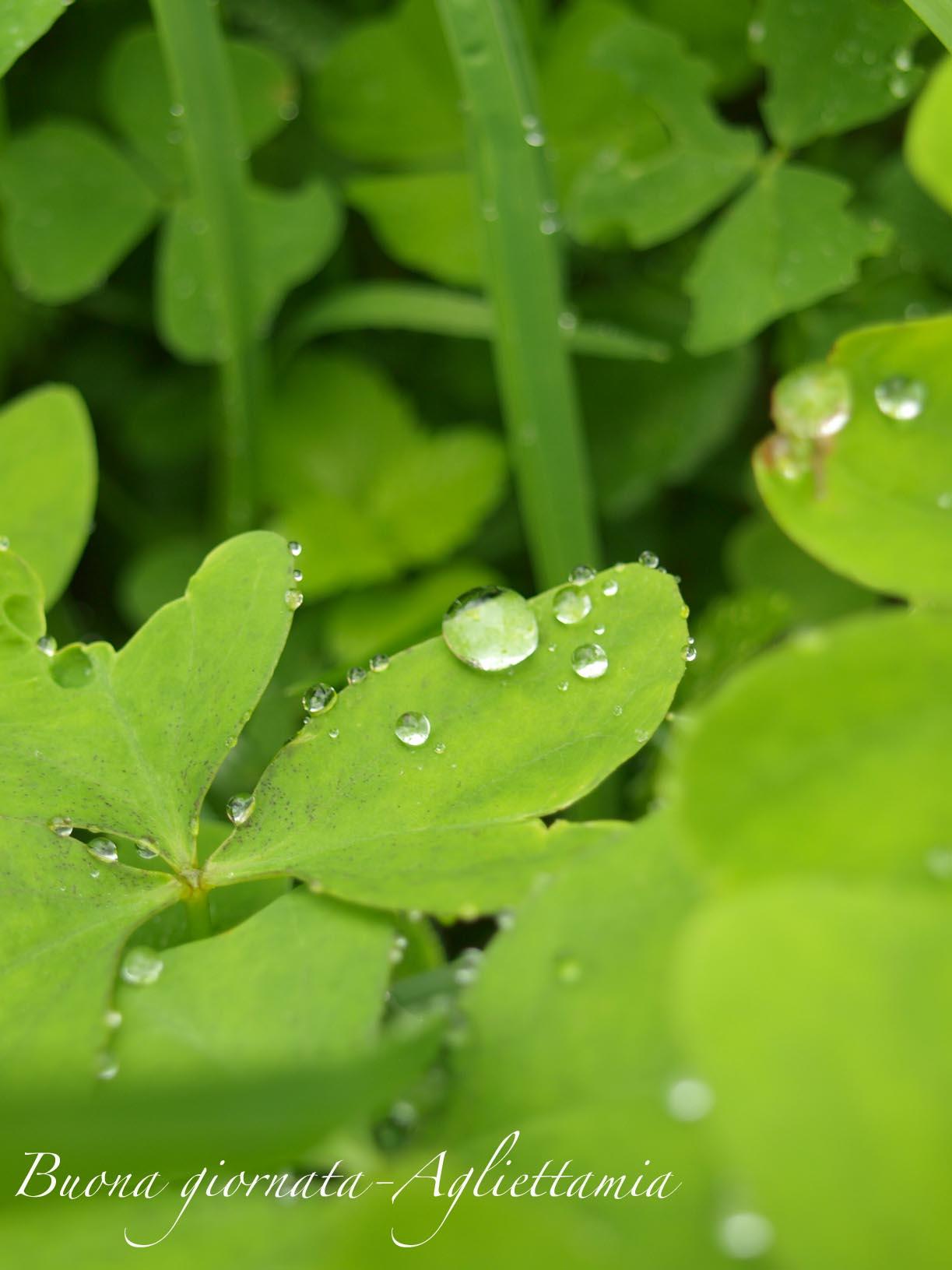 雨がくれるキラキラな贈り物@山の家_c0179785_6153112.jpg