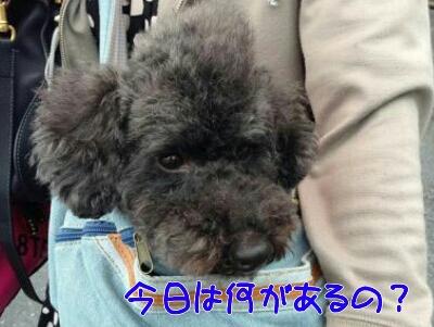 b0236618_20121157.jpg