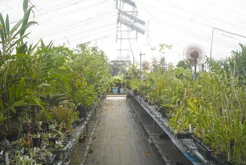 植物園へ行く_b0212922_19521913.jpg