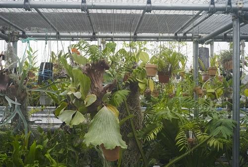 植物園へ行く_b0212922_19524874.jpg