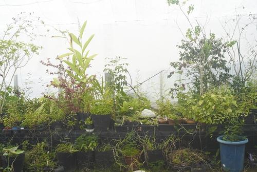 植物園へ行く_b0212922_2003411.jpg