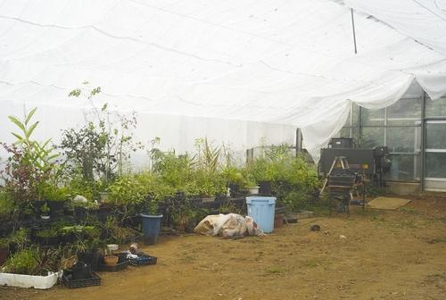 植物園へ行く_b0212922_2004440.jpg
