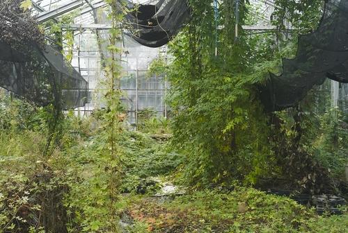 植物園へ行く_b0212922_2041358.jpg