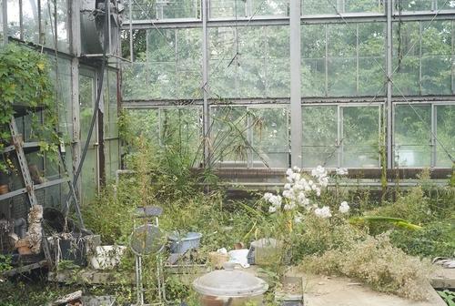 植物園へ行く_b0212922_2042231.jpg