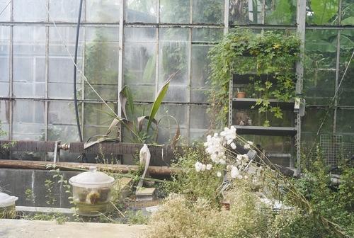植物園へ行く_b0212922_2043420.jpg