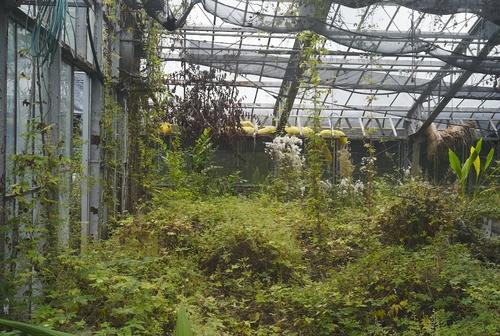 植物園へ行く_b0212922_2044829.jpg
