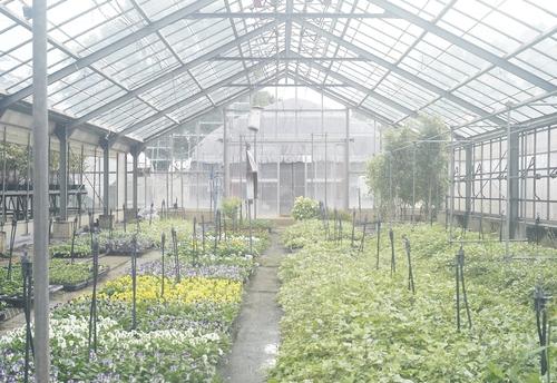 植物園へ行く_b0212922_2061875.jpg