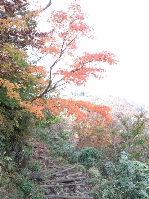 氷ノ山の紅葉始まりましたよー!!_f0101226_2005314.jpg
