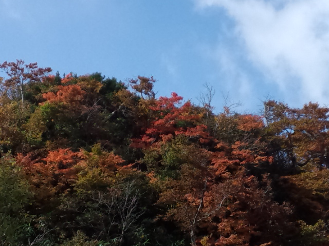 氷ノ山の紅葉始まりましたよー!!_f0101226_2022624.jpg