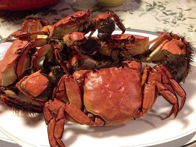 /// 秋の味覚、岸田川の「モクズ蟹」の湯で蟹をいただきました ///_f0112434_1943595.jpg