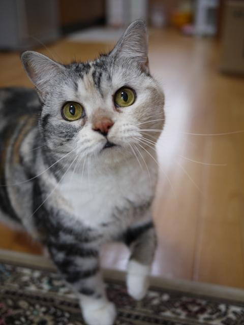 猫のお友だち さくらちゃん編。_a0143140_184431.jpg