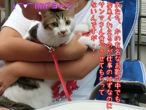 a0166954_1373976.jpg