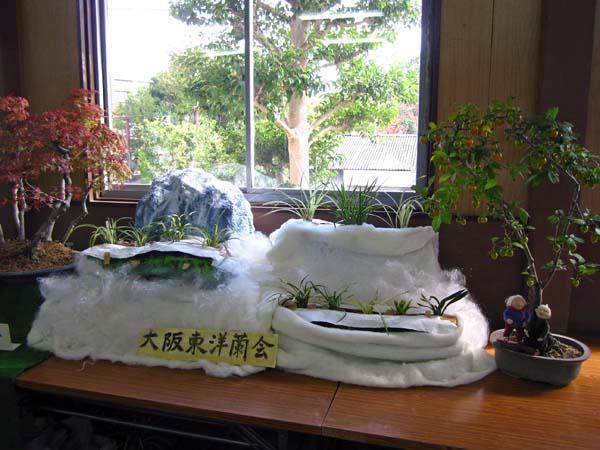 大阪東洋蘭会秋季展示会              No.1209_d0103457_14434823.jpg