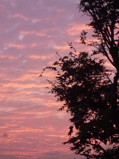 autumn walk その3 鯖雲と夕陽♪_a0165160_18402367.jpg