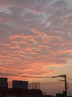 autumn walk その3 鯖雲と夕陽♪_a0165160_18422896.jpg