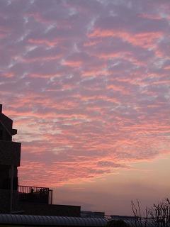 autumn walk その3 鯖雲と夕陽♪_a0165160_18442684.jpg