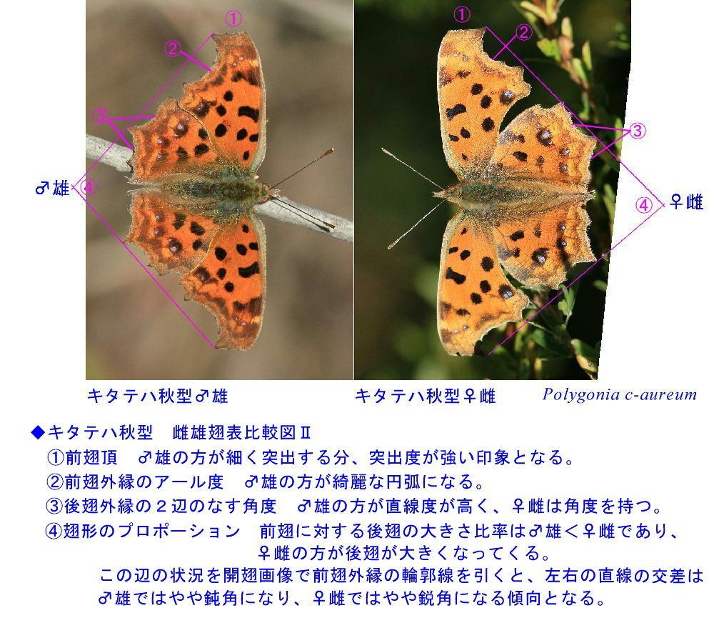 a0146869_1203182.jpg