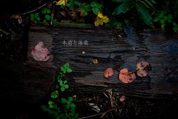 組写真 木道と落葉_b0229469_232214.jpg