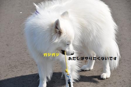 f0212597_19244459.jpg