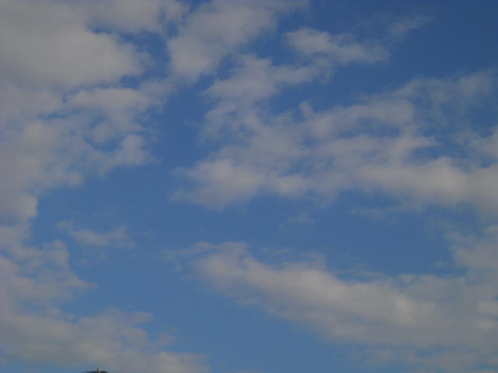 飛ぶ鳥も、飛ばない鳥も ~ ♪_f0146802_20592390.jpg