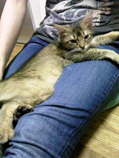 続・子猫さま_d0101514_11503278.jpg