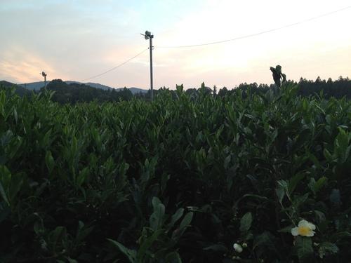 紅茶旅 vol.2 (新城~東栄町~鳳来 2)_b0220318_1873696.jpg