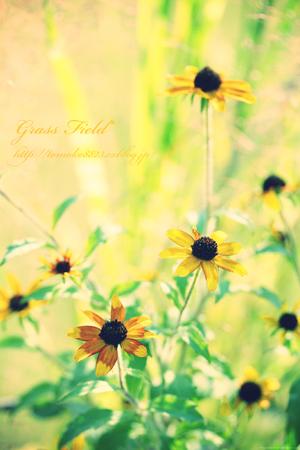 お花と向井くんと_a0275527_154724.jpg