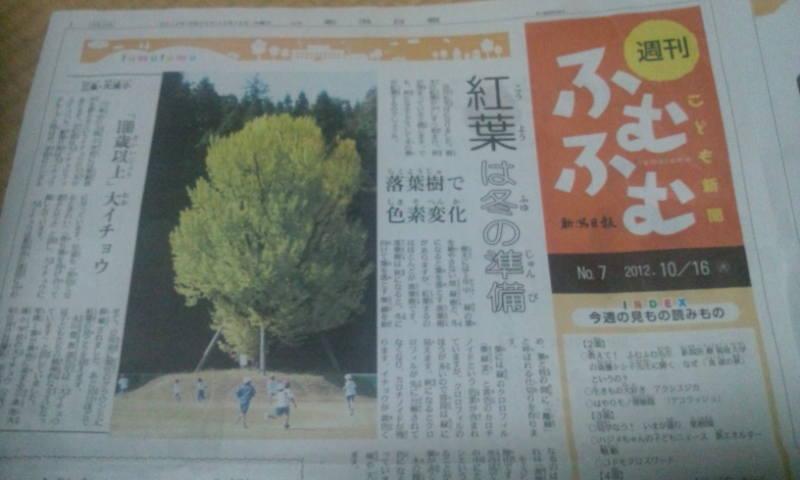 本日の新潟日報_a0232051_7153571.jpg