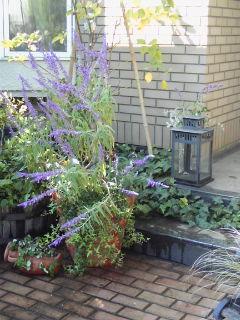 The Garden!  Vol.5_a0229658_15303613.jpg