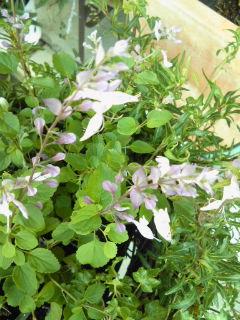 The Garden!  Vol.5_a0229658_15555474.jpg