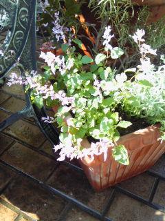 The Garden!  Vol.5_a0229658_16114424.jpg