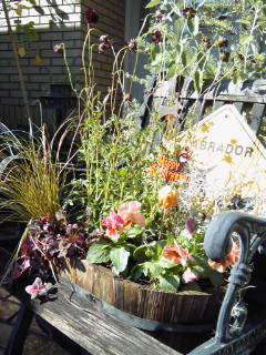 The Garden!  Vol.5_a0229658_16541.jpg