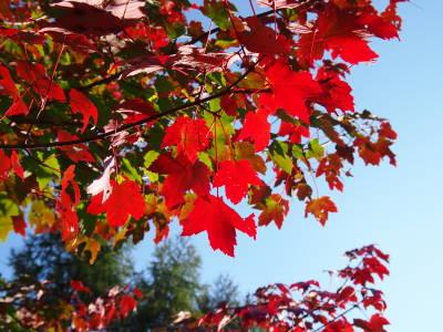 庭の秋_a0129867_16182110.jpg