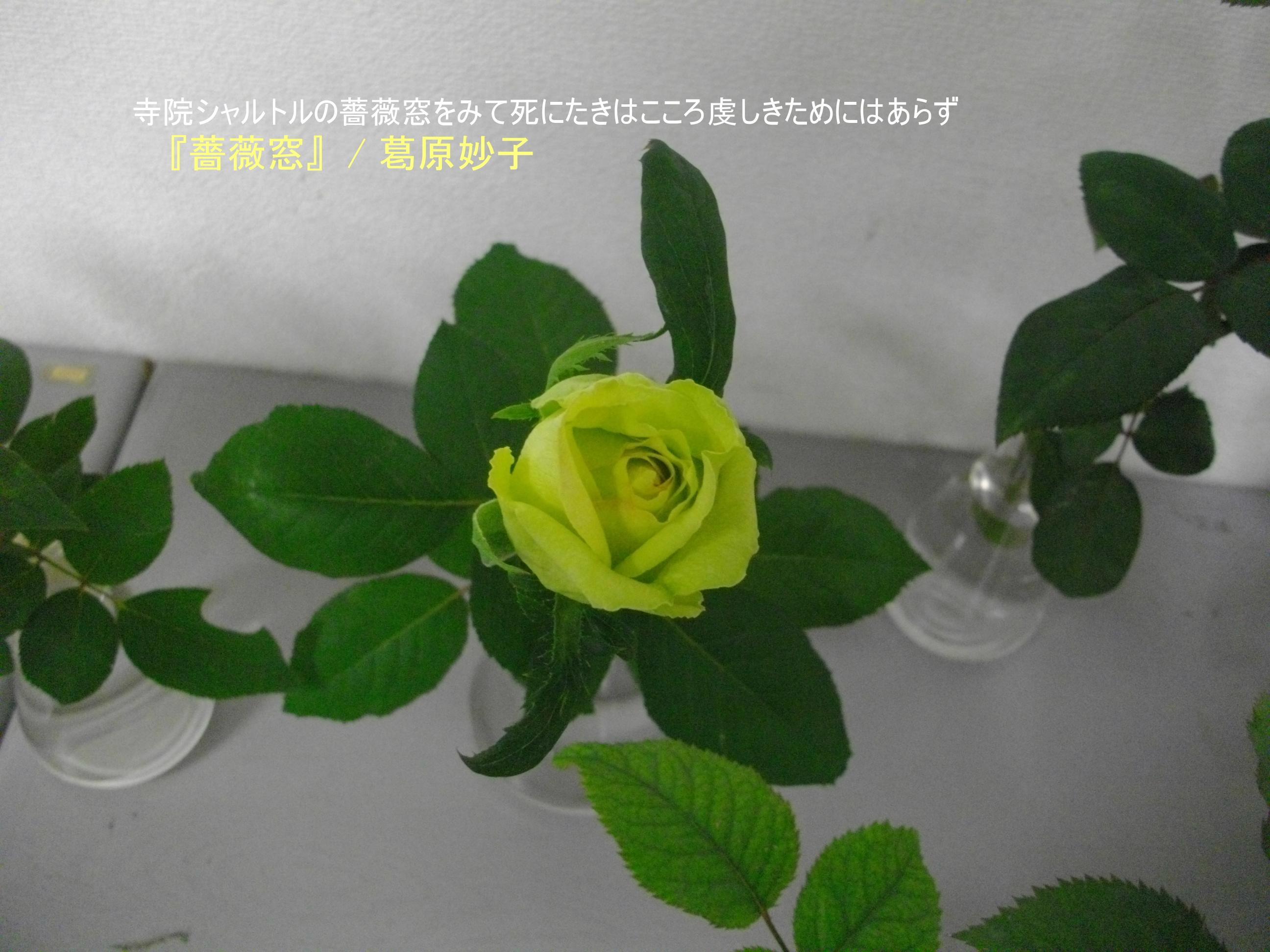 e0265768_1849868.jpg